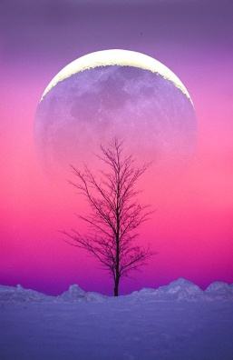 Pink dawn