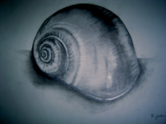 The simplicity of a shell